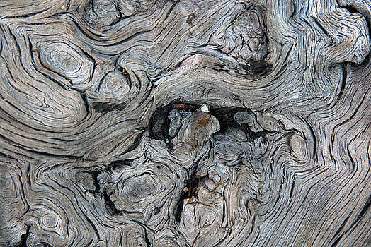 Tree Knot Pattern by Michelle Halsey