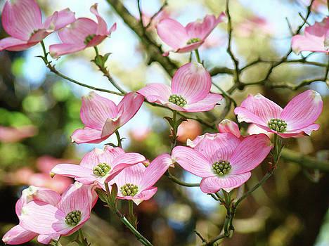 Baslee Troutman - Tree Landscape Pink Dogwood Flowers Baslee Troutman