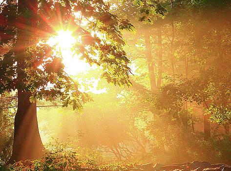 Tree Light-God's rays by Brian Pflanz