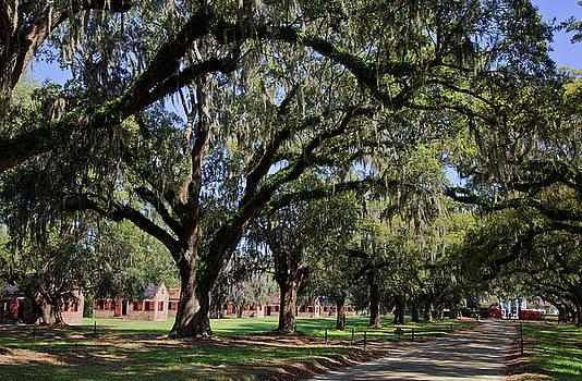 Jill Lang - Tree Line and Driveway