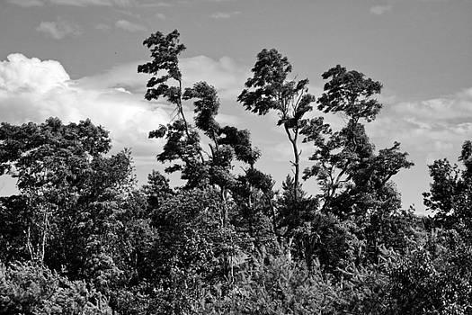 Tree Line by Don Pettengill