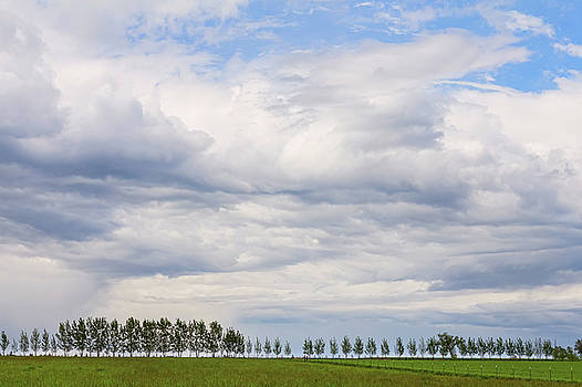 Tree Line by James BO Insogna