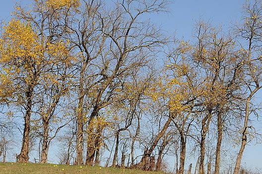 Tree Line by Jon Benson