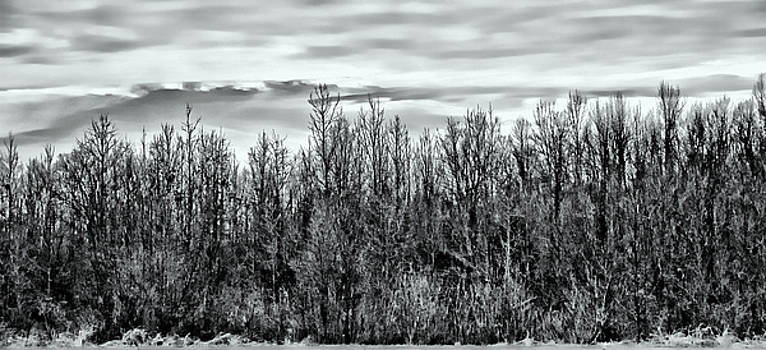 Tree Line Panorama by Suzanne Stout