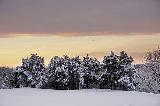 Tree Line by Phil Child
