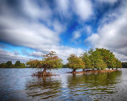 Tree Line Sky by Alan Raasch