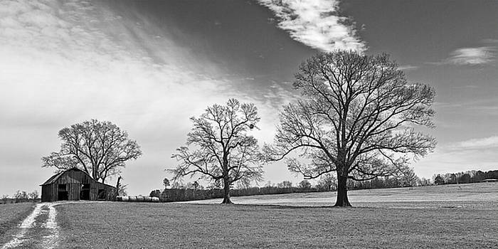 Tree Lined Drive by Ron Dubin