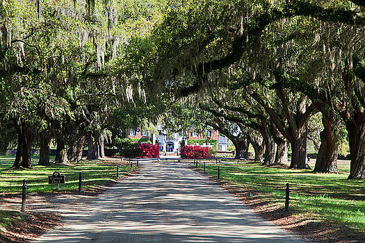 Jill Lang - Tree Lined Driveway
