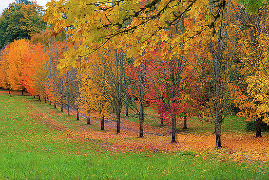 Tree Lined Path with Fall Foliage by Jit Lim
