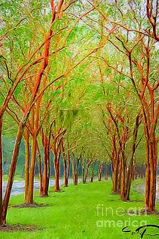 Tree Lined Walk by Paul Wilford