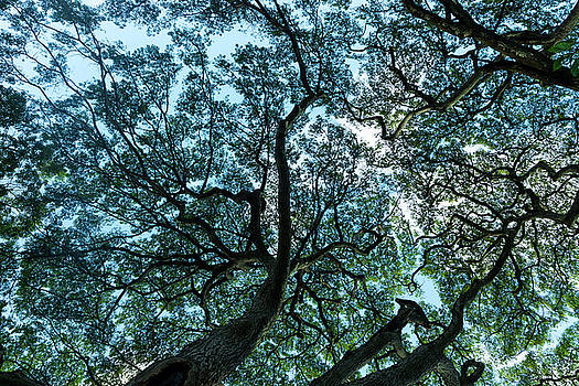Tree Map by Sean Davey