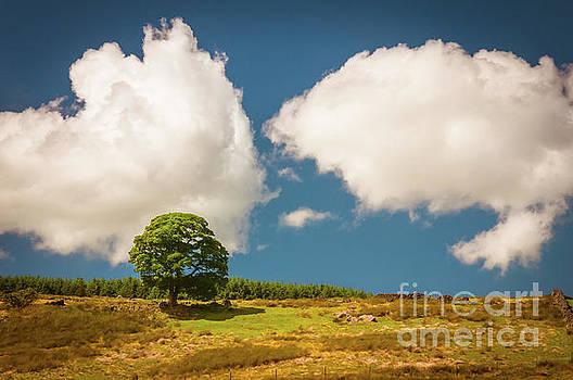 Mariusz Talarek - Tree