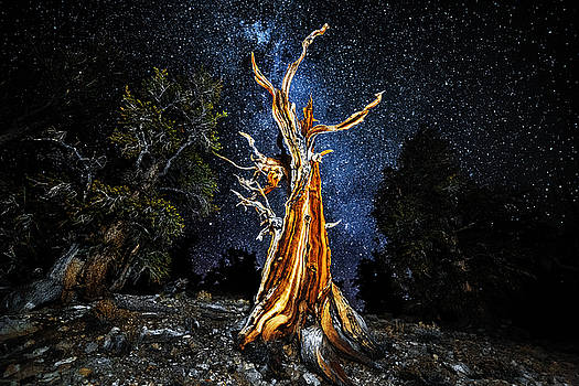 Tree of Eternity by Justin Lowery