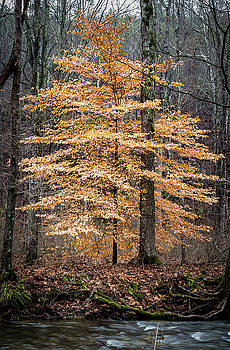 Tree of Gold by Jim Johnson