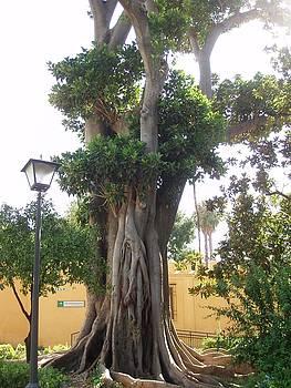 Tree of Life by Andrea Smith