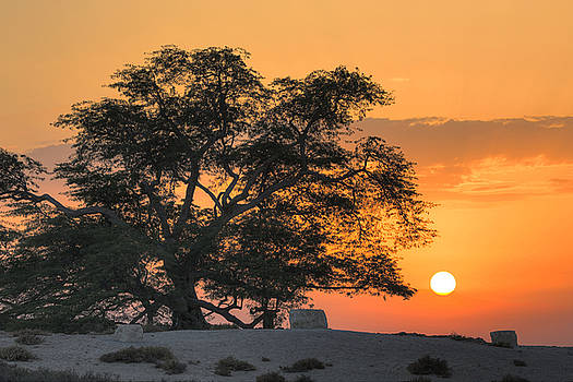 Tree of Life, Bahrain by Robert Lyon
