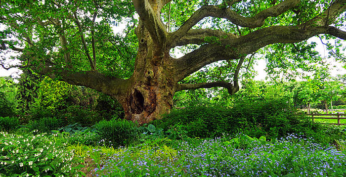 Tree of Life by Christian Slanec