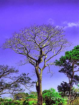 Onedayoneimage Photography - Tree of Life