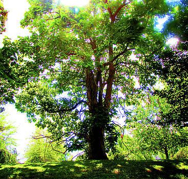 Tree of Light by Art By ONYX