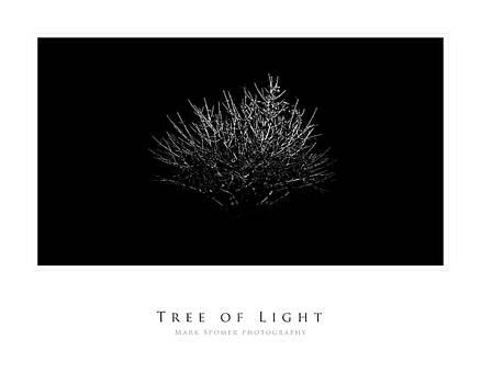 Tree of Light by Mark Spomer