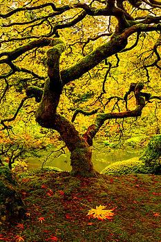 Tree Of Light Panel 2 by Ryan Smith