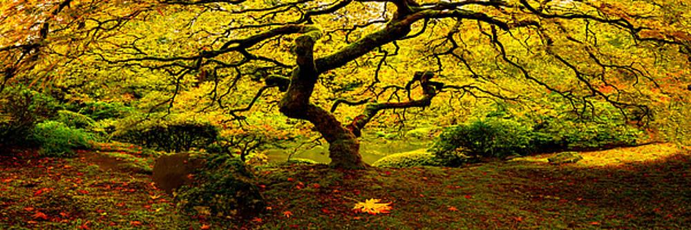 Tree of Light Pano by Ryan Smith