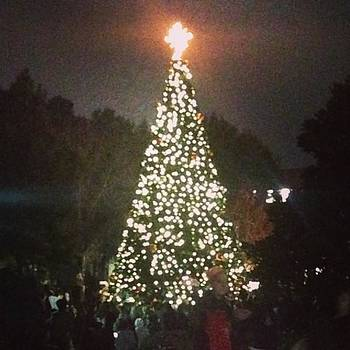 Tree Of Light #shsu #christmas #tree by Sarah Verdejo