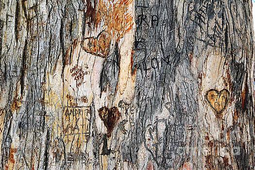 James Brunker - Tree of Love 3