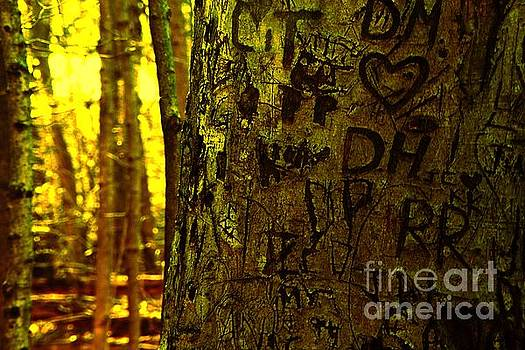 Tree of Love by Don Kenworthy