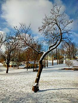 tree on Atchison St. by Dustin Soph