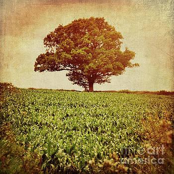 Tree on edge of field by Lyn Randle