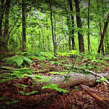 Tree On Forest Floor by Amanda Richter