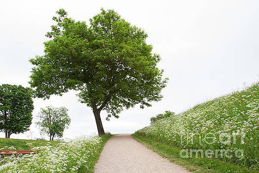Tree on Path by Denise Lilly