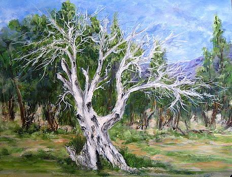Tree on Seventeen by Thomas Restifo