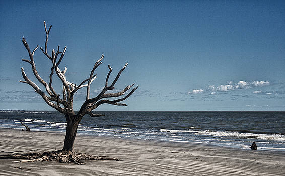 Tree on the Edge by Sandy Schepis