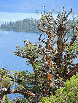 Tree Over Emerald Cove by Lynda Lehmann