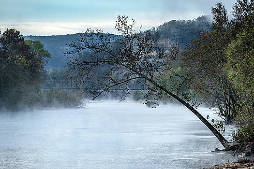 Tree over Gasconade River by Jae Mishra