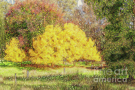 Tree Park Aglow by Elaine Teague