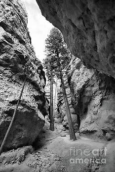 Chuck Kuhn - Tree Path BW Bryce