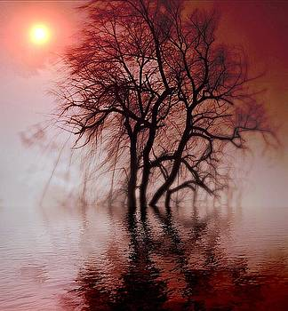 Tree Reflection by Collette Rogers