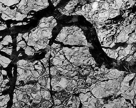 Tree Reflection I BW by David Gordon