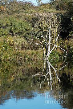 Compuinfoto - tree reflection in autumn
