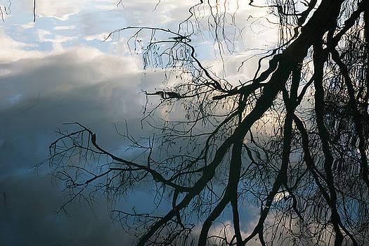 Tree reflection by Massimo Discepoli