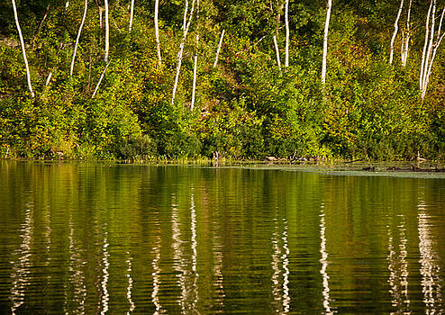 Tree Reflections 3 by Matthias Flynn
