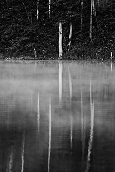 Tree Reflections 4 by Matthias Flynn