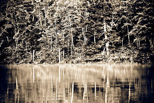 Tree Reflections 5 by Matthias Flynn