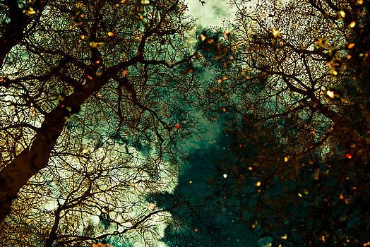 Tree Reflections by Grebo Gray