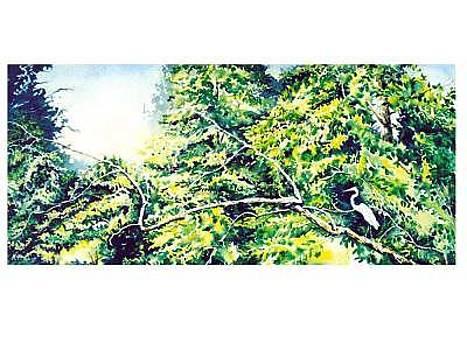 Tree Roost by Kris Killman