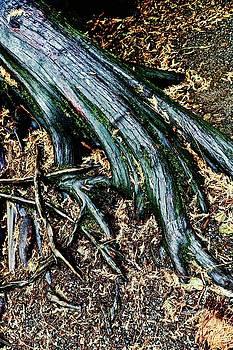 Tree Root by Brian Sereda