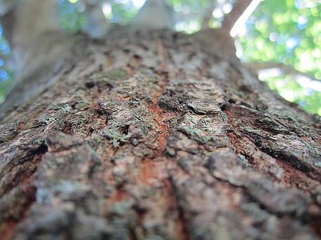 Tree scrapes by Mohammad Raiyn
